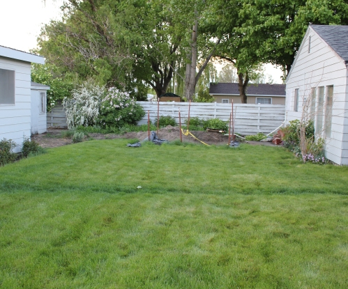 septic grass before destruction