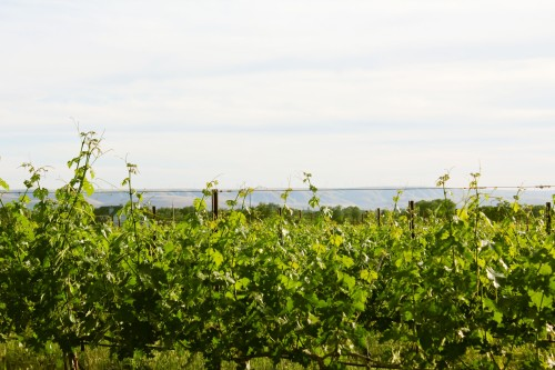 vineyard and wind machines
