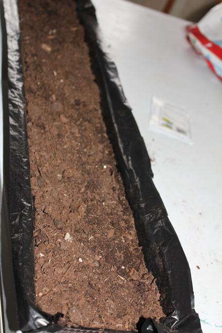 grass tray full of dirt