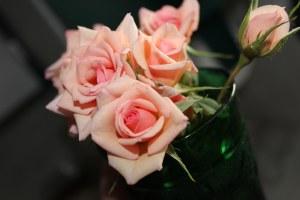 Mini roses in vase